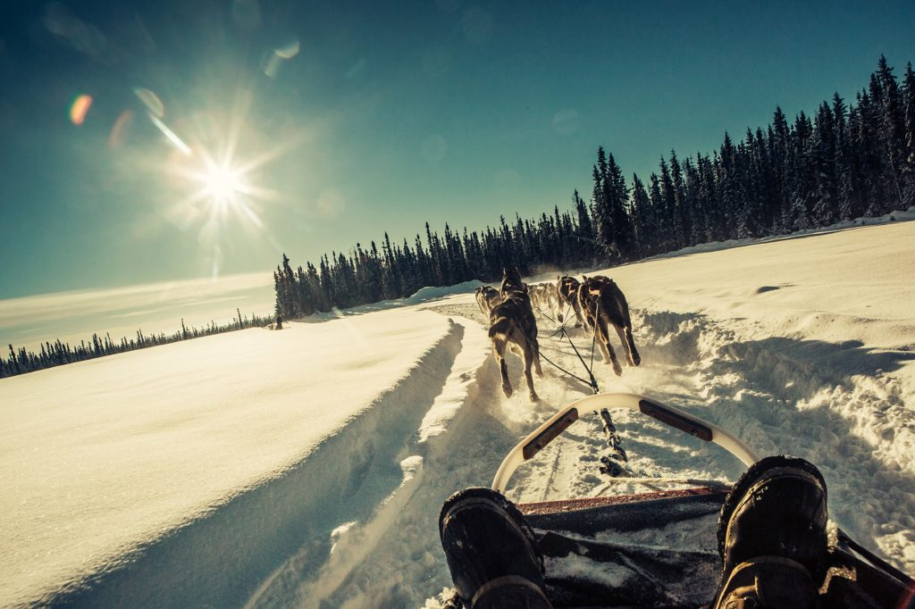 Dogsledding is one of the fun activities to do in the winter, and is available right down the road from the Grizzly Lodge.